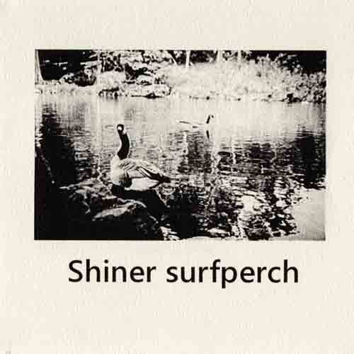 SUN SUI RAW EP Shiner surfperch